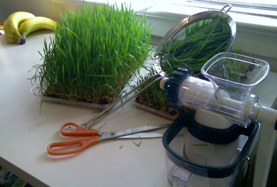 "12"" x 8"" trays wheatgrass tray, manual juicer"