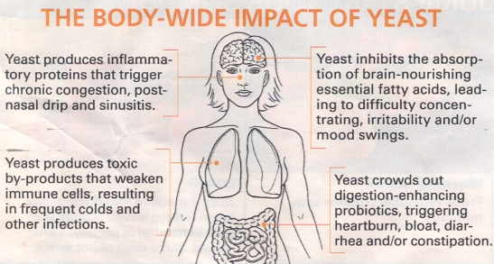 The Body-Wide Impact of Yeast